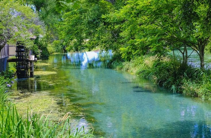 日本一広大なわさび田を有する「大王わさび農場」