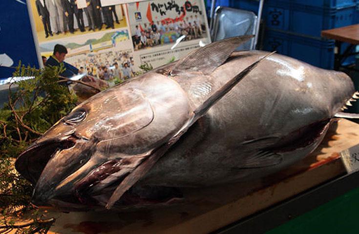 全国でも有数の生マグロの水揚げ量を誇る塩釜港