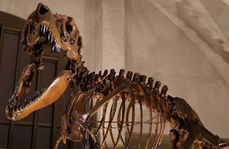 「東海大学海洋学部博物館」で恐竜ナイトツアー体験