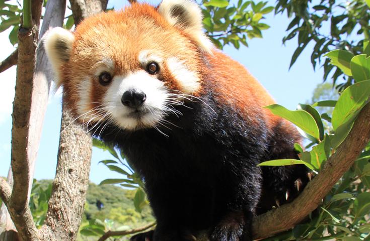 あの「風太」君誕生の地「日本平動物園」