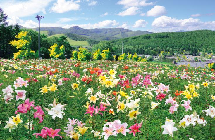 [新宿発]爽やかな風とライムグリーンに輝く「アカシアの丘」の空中散歩とぶどうと絶品「貴陽」のW狩り食べ放題のバスツアー!
