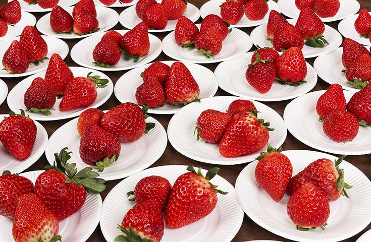 <あまおう確約>3種のブランドイチゴ食べ放題!近江牛のビーフシチュー&二段せいろ蒸しのご昼食や『秘境』Wパワースポット巡り等、大充実の日帰りバスツアー!