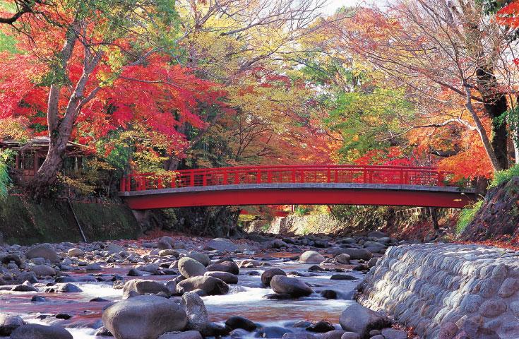修善寺桂橋 写真提供:静岡県観光協会