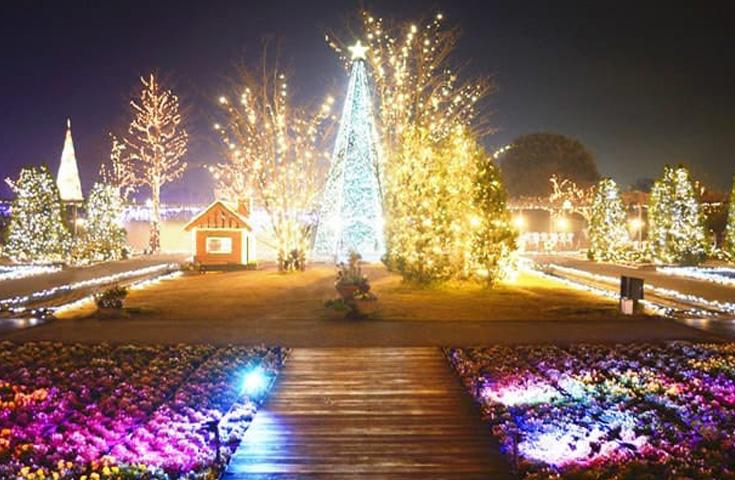 日本三大イルミネーション!あしかがフラワーパークで幻想の世界を満喫!
