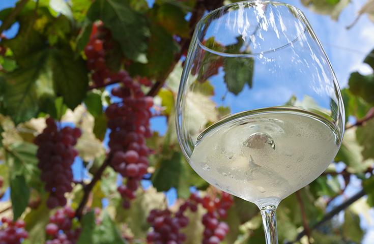 ぶどう畑とワイングラス(イメージ)