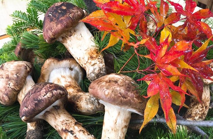 天然国産マツタケ。天然ものの特有の強烈に後を引く魅惑の香りをご堪能ください。