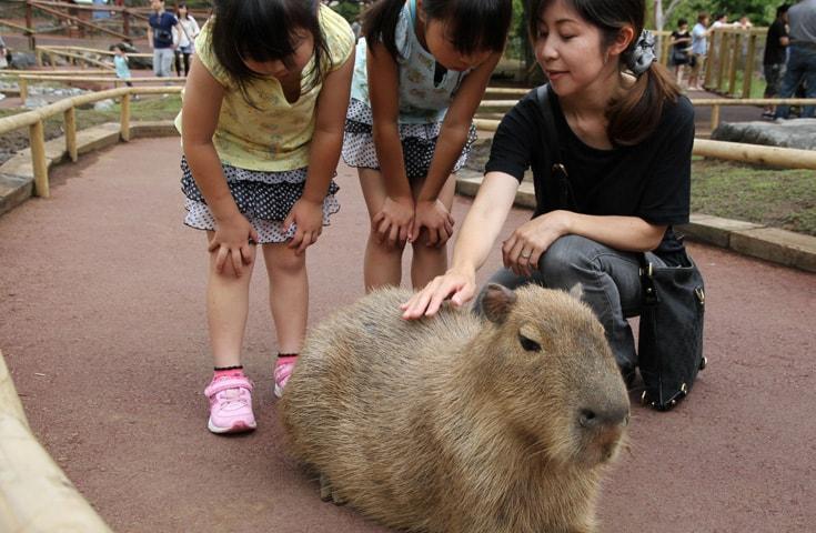 動物達との、楽しい触れ合い体験