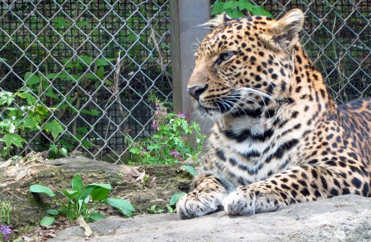 間近で野生動物を観察できるサファリゾーン