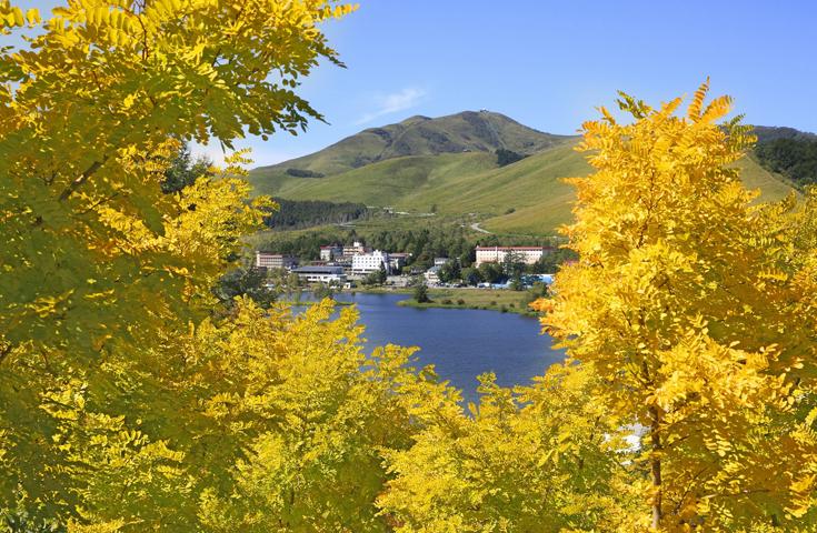 日の光で金色の輝きをみせるアカシアの丘