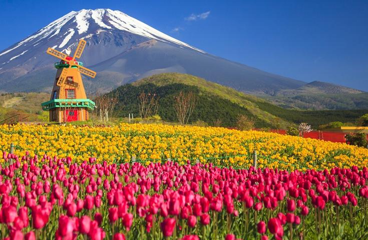 20万本のチューリップが咲き誇るります