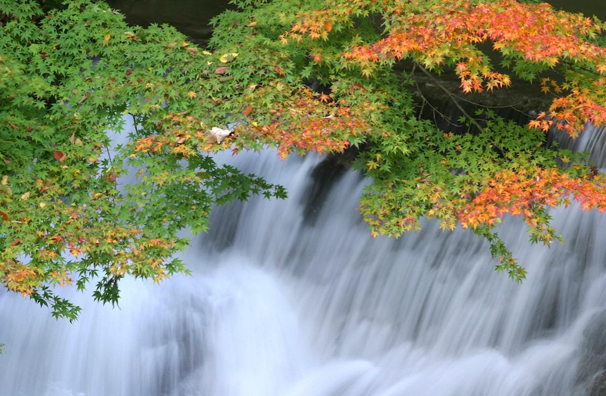 壮大な滝と紅葉の共演
