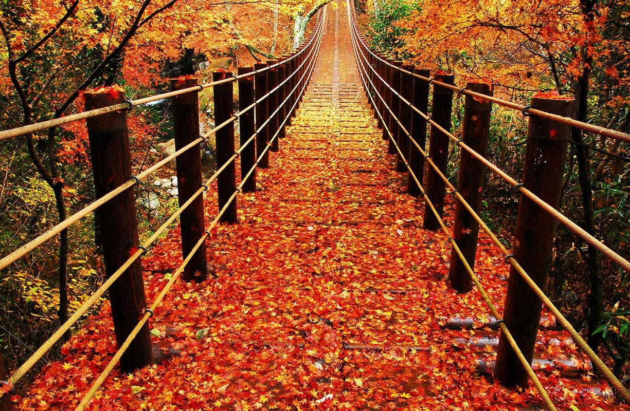 紅葉狩りを楽しむ「花貫渓谷」