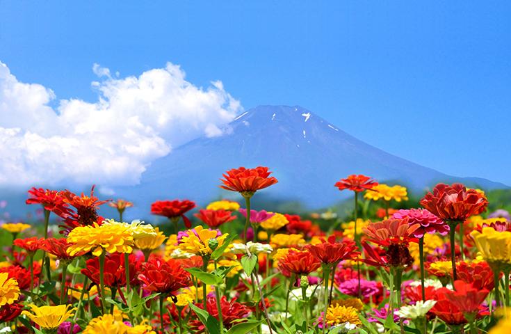 [新宿発]富士山麓に咲く彩り豊かな季節の花々と果汁あふれる桃狩り&桃食べ放題!人気の『桔梗信玄餅』詰め放題やランチバイキングにワインの試飲体験等、充実の日帰りバスツアー!