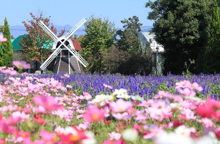 色とりどりに咲き誇る花観賞&庭園散策
