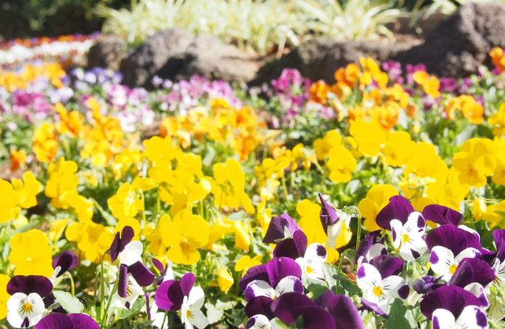 季節の花咲く庭園