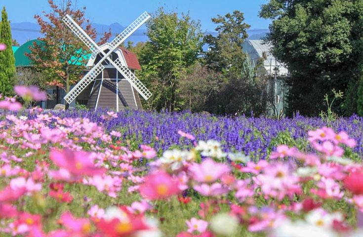 一万坪の広大な敷地に咲き誇るハーブや四季折々の美しい花々