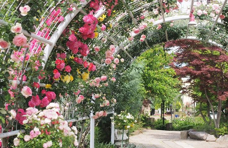 一万坪の大庭園に咲くハーブとお花をお楽しみください。