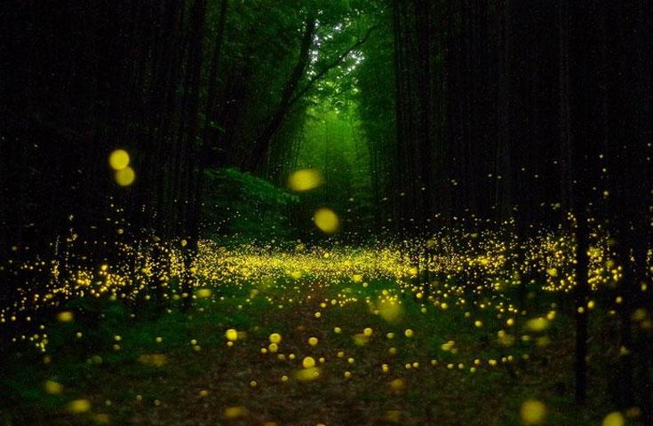 ホタルの幻想的な優しい光にうっとり。
