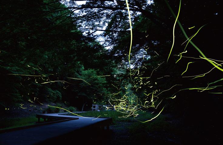 [新宿発]初夏に楽しむ幻想的な世界「濃溝の滝」ホタル観賞バスツアー!