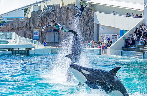 海の動物たちのダイナミックなパフォーマンスショー