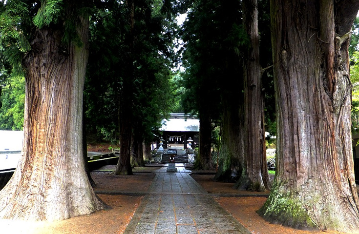 河口浅間神社は七本杉と呼ばれる御神木がパワースポット