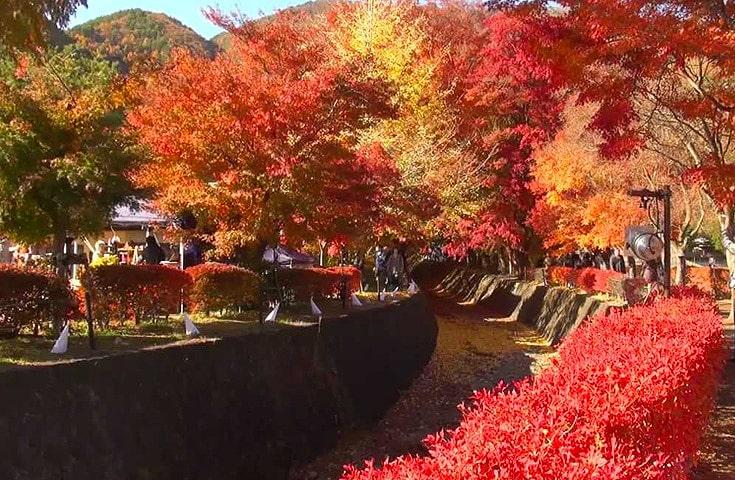 色鮮やかな紅葉が地面を覆う紅葉トンネルなどが見所