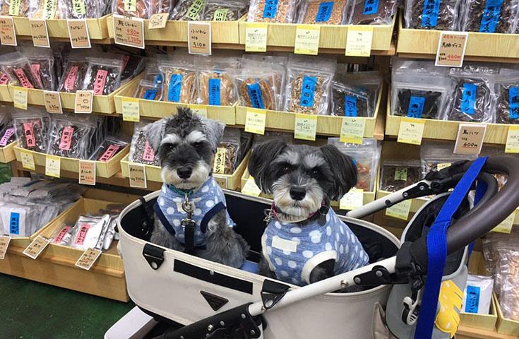 無添加食品のお店で愛犬用オヤツの試食&お買い