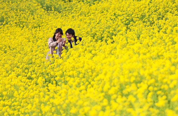 見頃の花畑のマザー牧場たっぷり3時間と美味しいいちごを狩り!三井アウトレットパーク木更津でお買物!