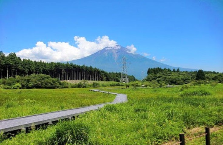 富士山麓エリア唯一の小田貫湿原