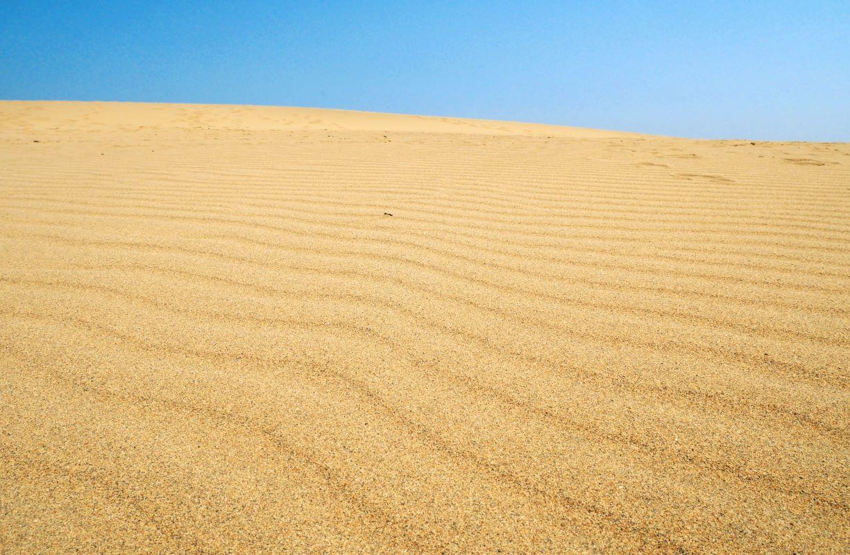 鳥取砂丘を代表する砂と風でできる芸術作品「風紋」