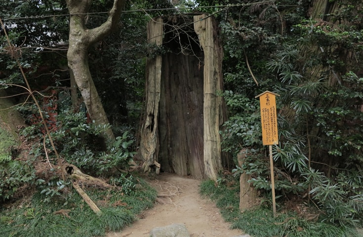 源頼義の祈願により三又に分かれた三本杉