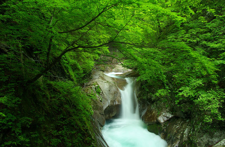 渓谷ならではの新緑が見ごろ