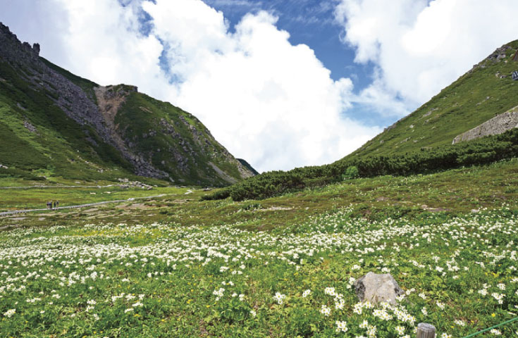 高山植物の咲き乱れるお花畑