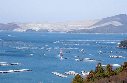 浦村湾、牡蠣にとって最も恵まれた環境