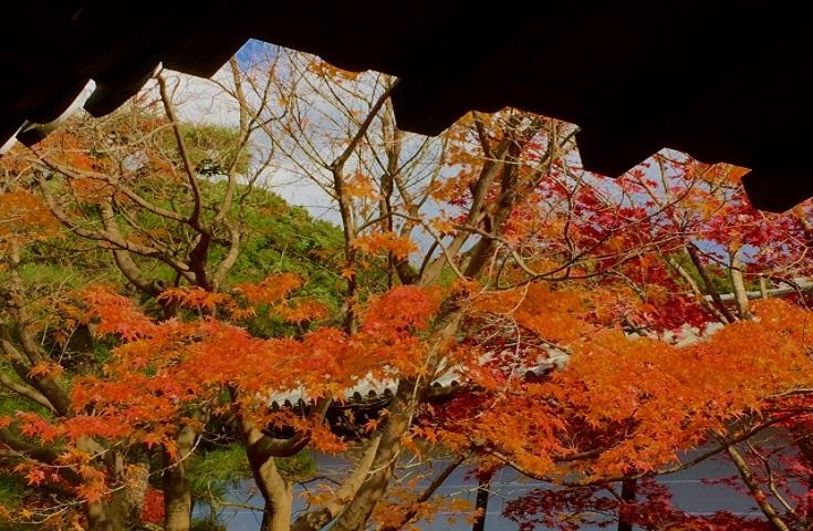 京都屈指の紅葉の名所―東福寺