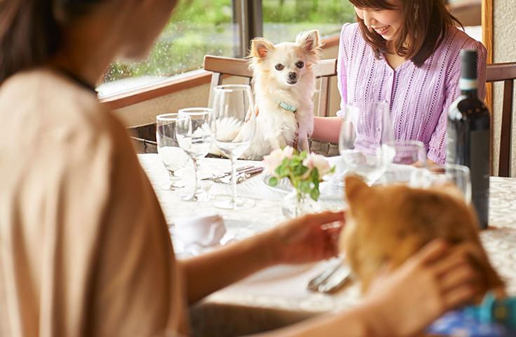 愛犬と一緒に優雅なお食事♪