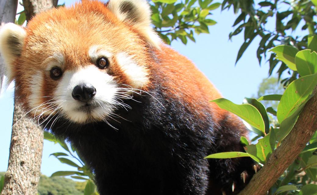 動物園 日本 平
